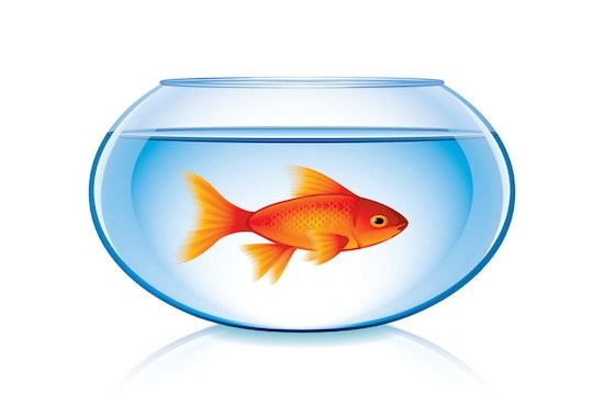 Attention Span of a Goldfish? Try Meditating